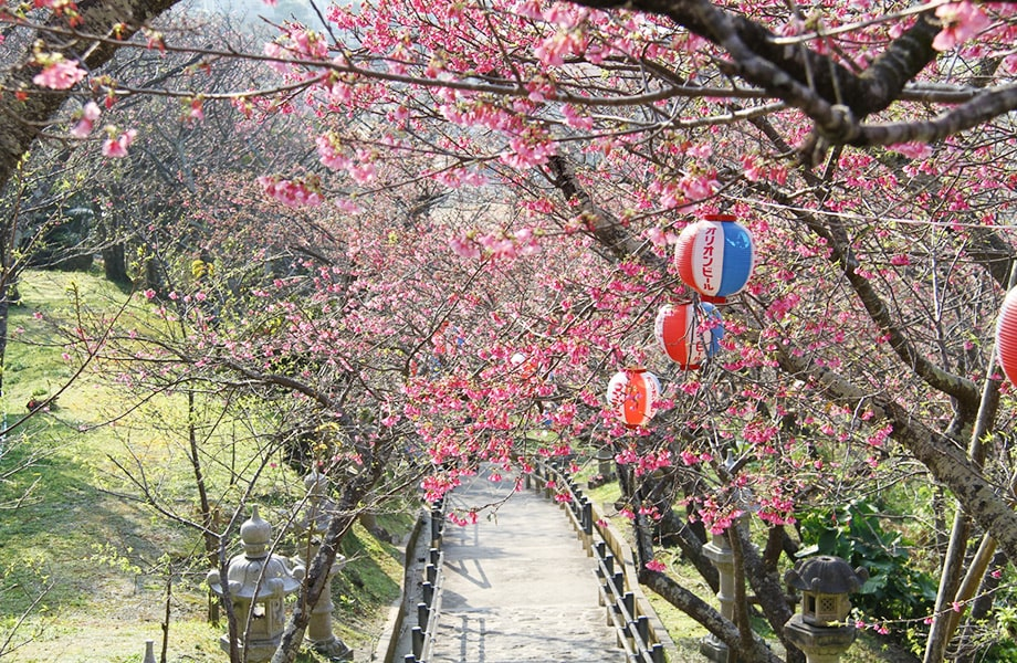 名護桜まつり